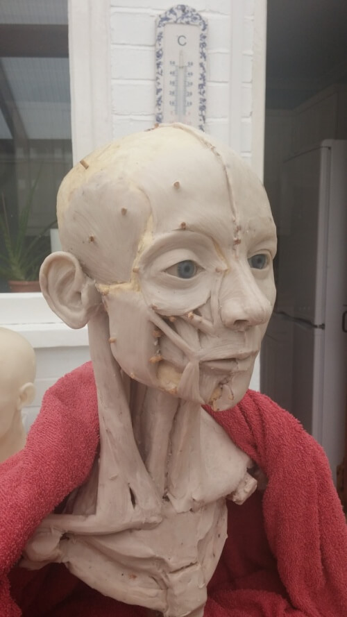 Facial reconstruction in wax, medical art, medical illustration, medical sculpture, catherine sulzmann