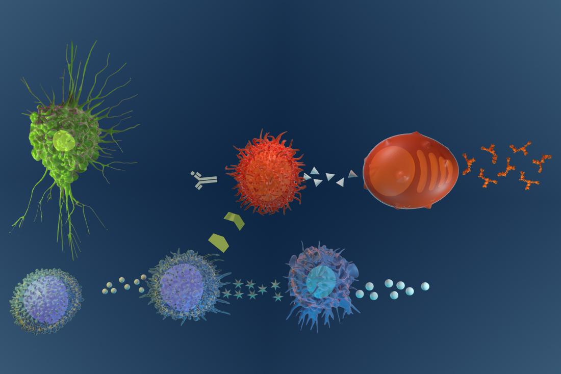 Immunity Cells