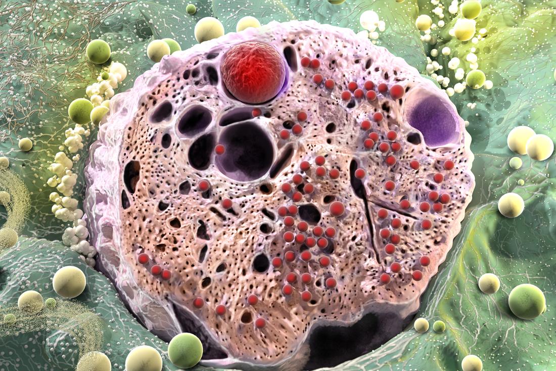 Pancreatic cell