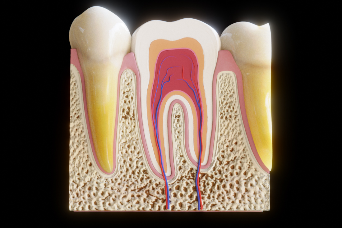 Tooth cross section