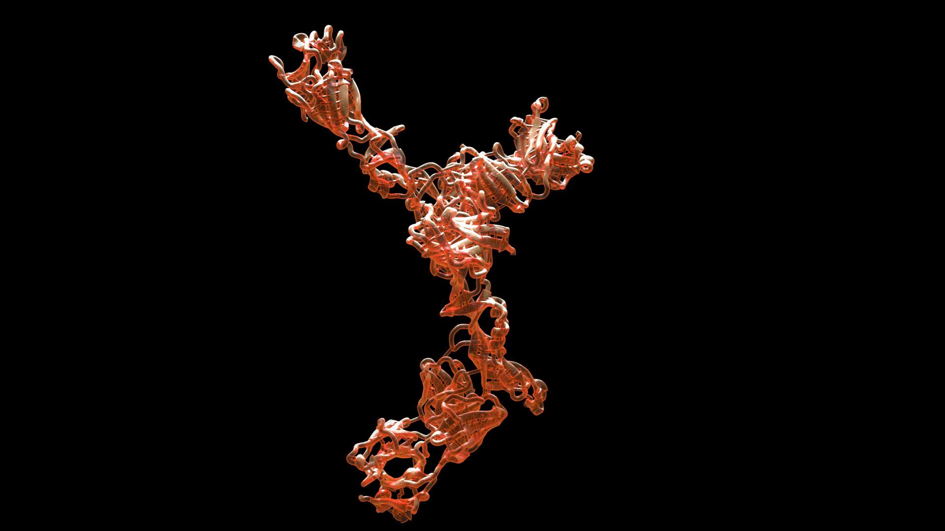 Y-antibody