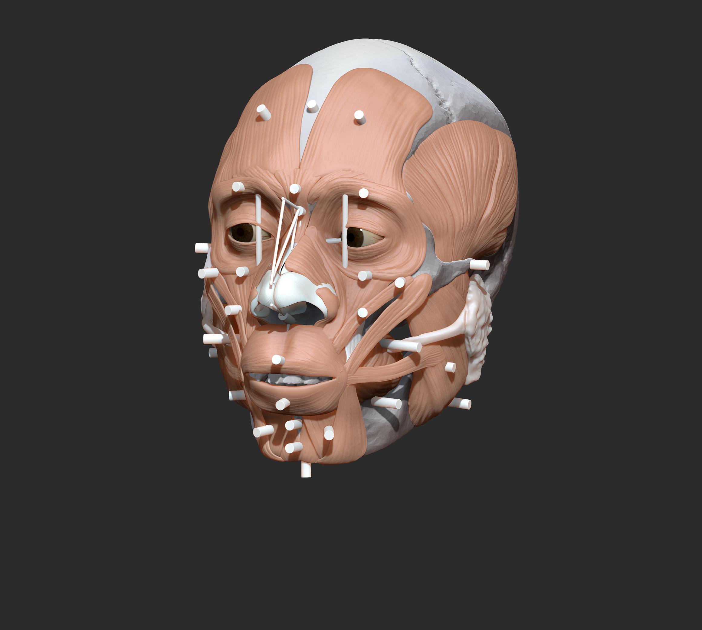 Facial reconstruction Medical illustration early homo sapiens