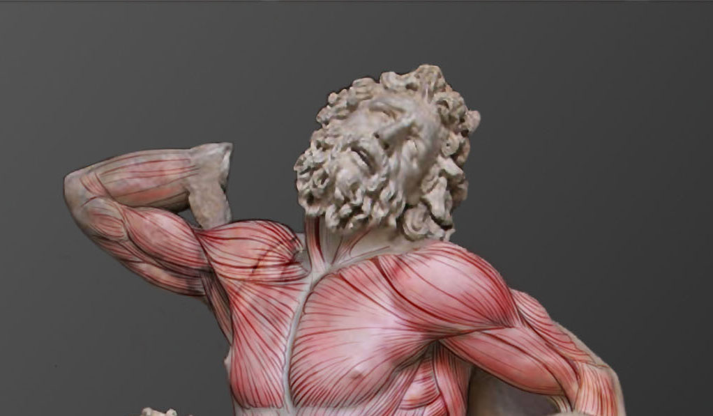 Ecorche of Laocoon and sons. Medical art workshop